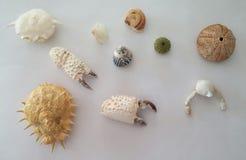 Remainings de algunas criaturas subacuáticas Fotos de archivo libres de regalías