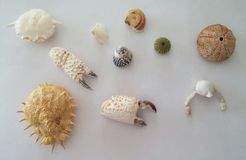 Remainings di alcune creature subacquee fotografie stock libere da diritti