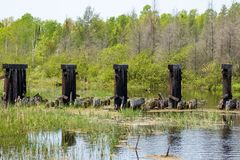 Remains of abandoned railroad bridge over Mosquito Brook in the Northwoods. Of Hayward, WI stock images