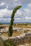 The remains of the ancient city of Chersonesus. Founded by the ancient Greeks. Hersones ruins, archaeological park Royalty Free Stock Photo