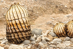 Remains of Barrel Cactus Royalty Free Stock Image