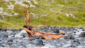 Remains of a boat wreck - Iceland - Selective focus Stock Photography