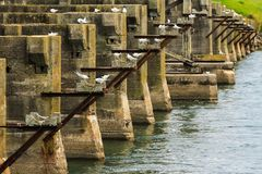 The remains of a bridge being used as a bird roost royalty free stock photos