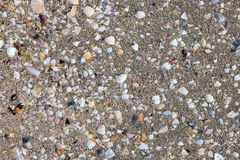 Remains of crustacean shells on the wet sand. Of the beach stock images