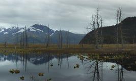 Remains da floresta Imagens de Stock