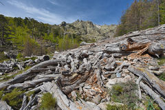 Remains of the dead tree in the mountain forest Stock Photography
