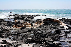 Remains of Dead Whale #3: Masirah Island, Oman Royalty Free Stock Photos
