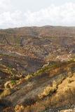Remains di un incendio forestale Fotografie Stock Libere da Diritti