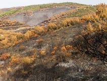 Remains di un incendio forestale Immagine Stock Libera da Diritti