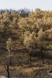 Remains di un incendio forestale Immagini Stock Libere da Diritti