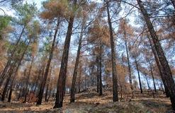 Remains di un incendio forestale immagini stock