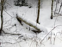 Remains of a fallen tree trunk covered with snow in a winter forest stock images