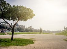 The remains of the famous Circus Maximus of Rome. With the famous Roman pine trees and a cypress tree in the background. Back light on a cloudy day Royalty Free Stock Images