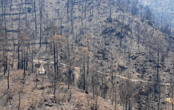 Remains of a forest fire. Fro a recent fire im Cyprus Royalty Free Stock Photos