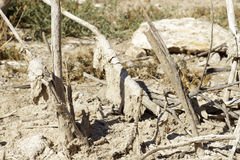 Remains of fully dry vegetation, covered by salt Stock Images