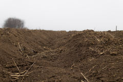 Remains of a furrow. Close-up of a furrow in the winter, long after the harvest royalty free stock photos