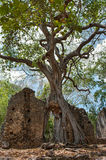 Remains of  Gede in Kenya, Royalty Free Stock Photography