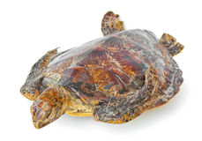 Remains of hawksbill sea turtle. Royalty Free Stock Images
