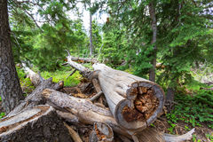 Remains of human activity in forest. Stock Image