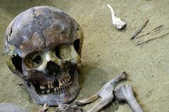 The concept of death and exhumation, archeology and scientific research. The remains of a human skull and bones on the sand. Close. The remains of a human skull royalty free stock photos
