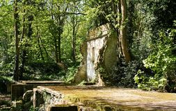 Remains of 1926 incorporating mill at Oare Gunpowder Works. Ruins brick built incorporating mill overgrown sycamore tree Acer pseudoplatanus Oare Gunpowder Works royalty free stock photos