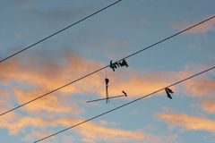 Remains of kite on the electric power line Stock Images