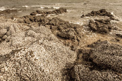 The remains of many shells on the stones Royalty Free Stock Images
