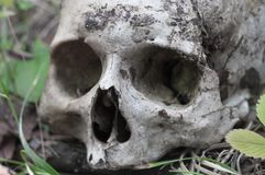 The remains of medieval warrior on the battlefield in autumn. Real human skull on nature grass field. Gothic background. The remains of medieval warrior on the royalty free stock images