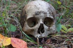 The remains of medieval warrior on the battlefield in autumn. Real human skull on nature grass field. Gothic background royalty free stock photo