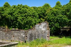 Devastated old brick wall with grass. The remains of the old building in Imperial City Hue. Around are green trees and long grass stock images