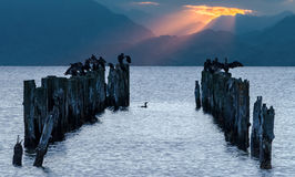 Remains of old fisheries pier with resting birds, Europe Royalty Free Stock Photos