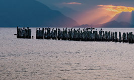 Remains of old fisheries pier with resting birds, Europe Royalty Free Stock Photography