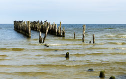 Remains of old fisheries pier with sitting birds, Europe Royalty Free Stock Image
