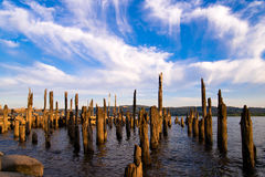 Remains of old pier sticking out of water of river rotten poles Stock Photos