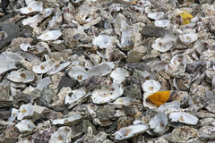 Remains oysters Royalty Free Stock Photography