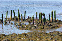 Remains of pier at Stockton Springs Maine Stock Photography
