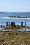 Remains of pier in Stockton Springs Maine Royalty Free Stock Images