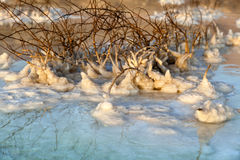 Dead Sea - Salt Covered Wilted Bush Royalty Free Stock Images