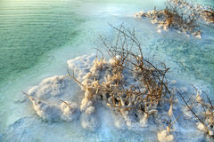 Dead Sea - Salt Covered Bushes at Dawn Stock Photography