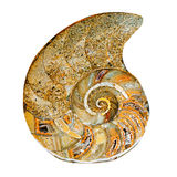 Remains of prehistoric sea shell Royalty Free Stock Photos