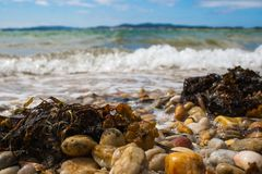 Remains of seaweed and seashells on a pebble beach with the ocean and waves in the background and a blue sky with clouds royalty free stock photography