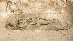 Remains of a Skeleton in Krabi, Thailand. Frontal view of rests of a skeleton in Krabi, Thailand Royalty Free Stock Photography