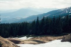 The remains of snow in the mountains in the spring in the forest. Nature landscape Royalty Free Stock Image