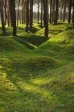 Remains of WW1 trenches at Vimy Ridge, Belgium. The eery remains of WW1 trenches, now overgrown by trees at Vimy Ridge. Belgium Stock Photos