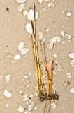 Remains of a young bamboo bush washed a shore  after a tropical storm. Remains of a young bamboo bush washed a shore with broken shells on a sandy beach on the Stock Image
