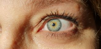 Remake blue eyes. A macro detail of Iride stock images