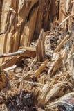 Remanente de un árbol quebrado Foto de archivo libre de regalías