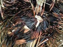 Remanente del árbol de hierba después del fuego imagen de archivo libre de regalías