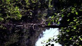 Remanso, un pequeño lago con una vegetación salvaje, densa alrededor almacen de metraje de vídeo