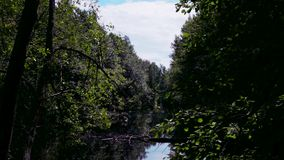 Remanso, un pequeño lago con una vegetación salvaje, densa alrededor metrajes